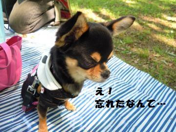 DSCN1140_convert_20120514212703.jpg
