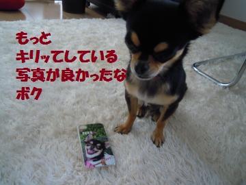 DSCN1178_convert_20120704214140.jpg