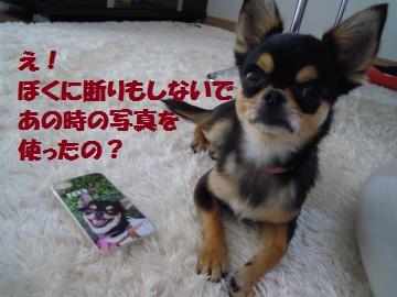 DSCN1179_convert_20120704214526.jpg