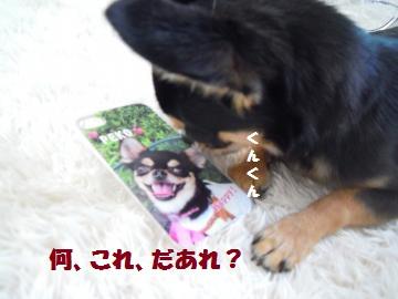 DSCN1180_convert_20120704214233.jpg