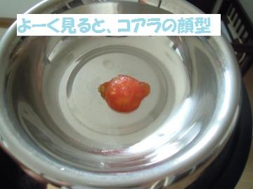 DSCN1211_convert_20120728114108.jpg