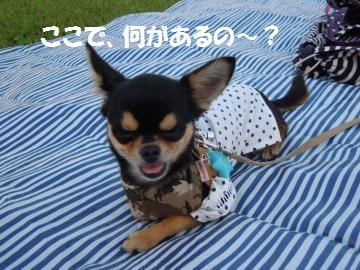 DSCN1253_convert_20120730134622_20120730144107.jpg