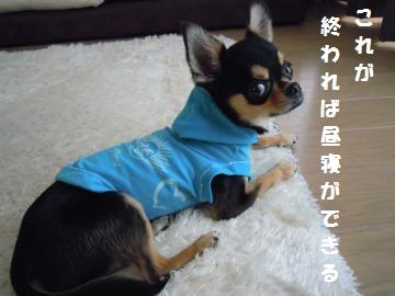 DSCN1304_convert_20120808161341_20120808163839.jpg