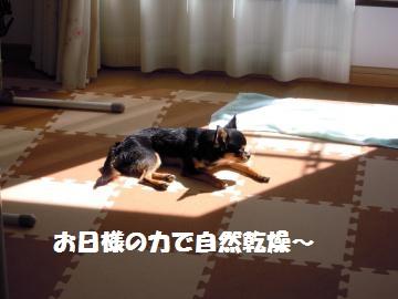 DSCN1334_convert_20120830225614.jpg