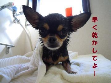 DSCN1385_convert_20121024145140.jpg