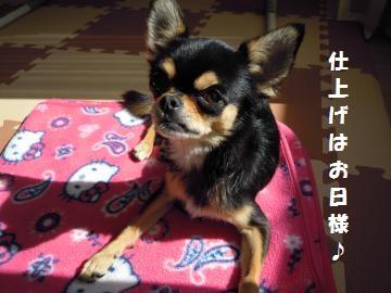 DSCN1390_convert_20121024145222_20121024151322.jpg