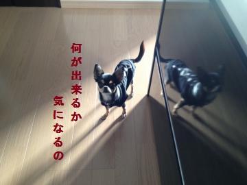 IMG_2163_convert_20121103162855.jpg