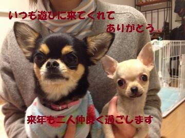 IMG_2526_convert_20121231125523.jpg