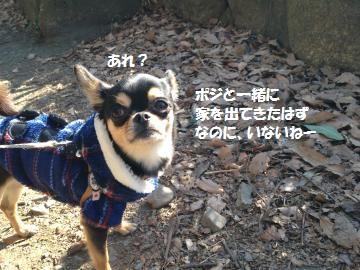 IMG_3101_convert_20130130155346.jpg