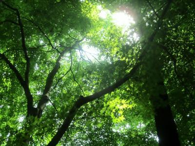 木立の中で