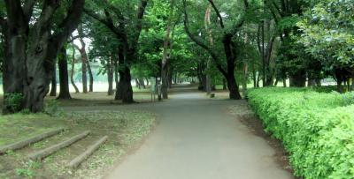 都立野川公園 自然野草園への道