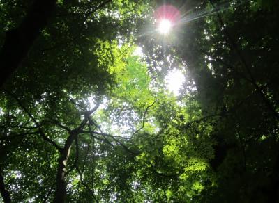 もみじの木洩れ日