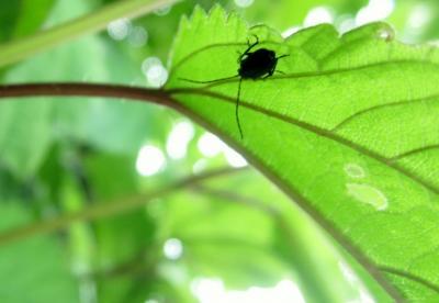 アニマの里に棲む虫たち