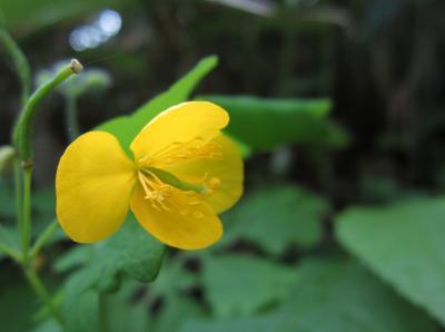 アニマの里の黄色いお花