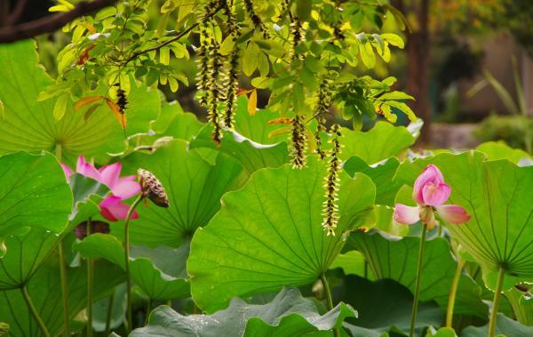 夏の池にて
