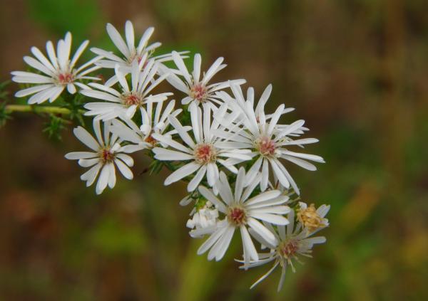 秋の多摩川の花畑