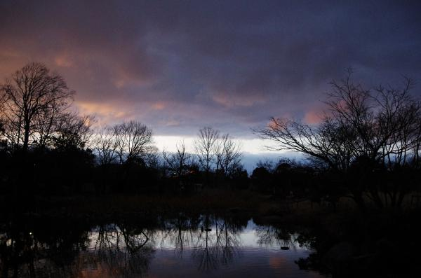 夕刻の蓮池