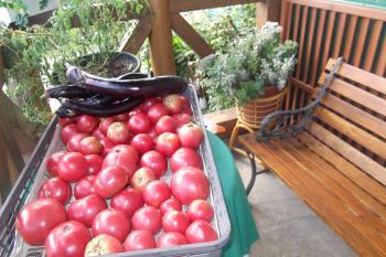 tomato100.jpg