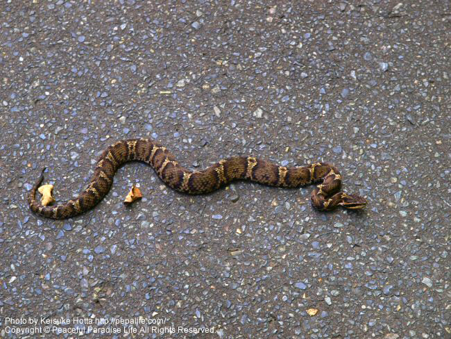 浅岸駅へ向かう途中に見たヘビくん