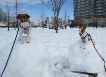 2月9日高島中央公園2