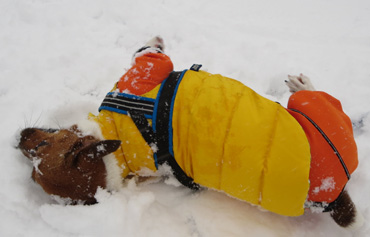 2月8日大雪2
