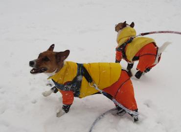 2月8日大雪4