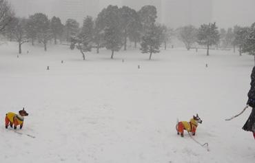 2月8日大雪3