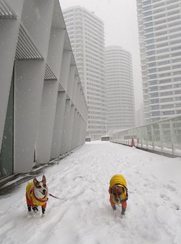 2月8日大雪1