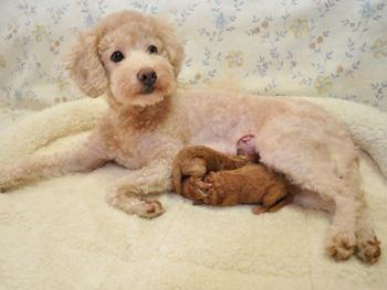 エミューちゃん出産