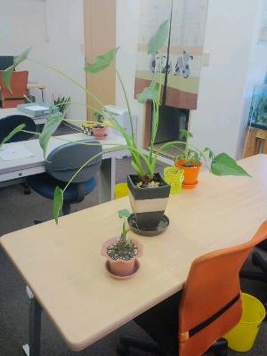 100均植物