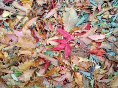 2012-11-12-1_convert_20121112143355.jpg