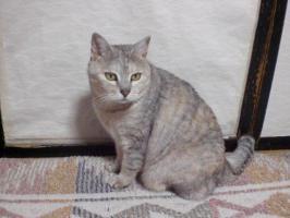 猫 20130306