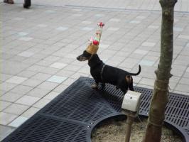 丸亀町にいた犬