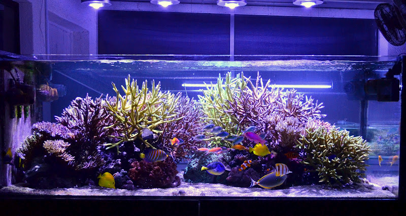 Aquarium-LED-light-.jpg