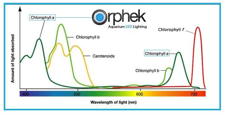 Chlorophyll-a-spectrum-corals.jpg