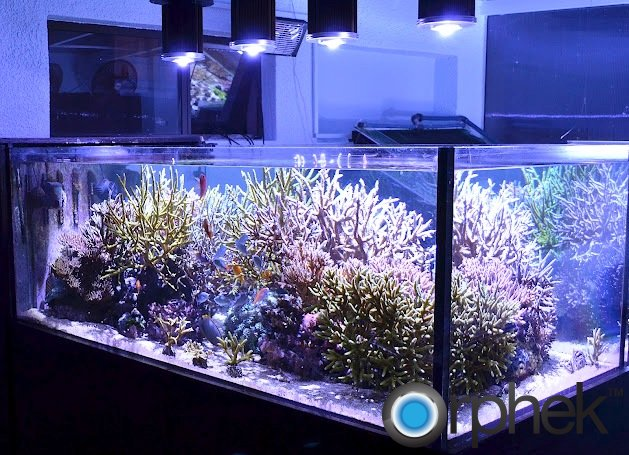 best-led-for-corals.jpg
