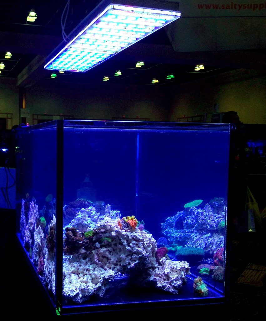 led-aquarium-lighting-851x1024.jpg