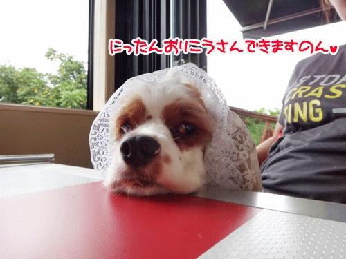 ニコかふぇ6の1