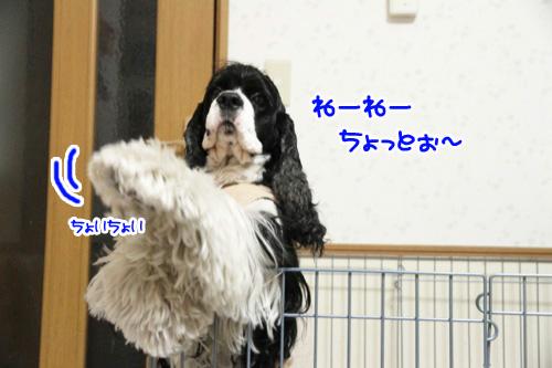ぽち4の1