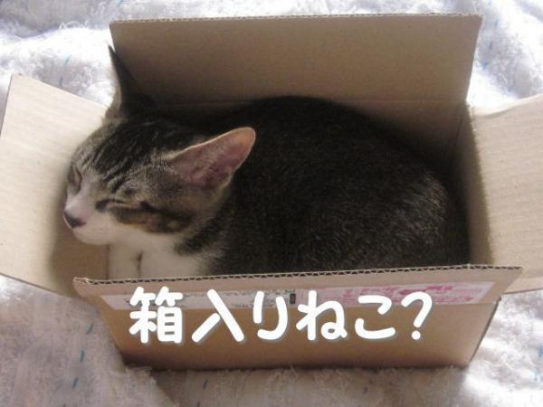 箱入りかいくん