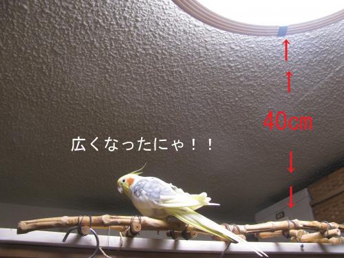 IMG_5345_convert_20141220210013のコピー