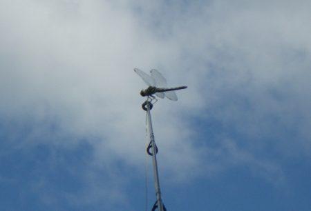 2012 6月22日 日高調整池2
