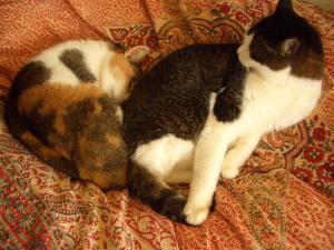 2013年正月の猫ども・モモとサクラ