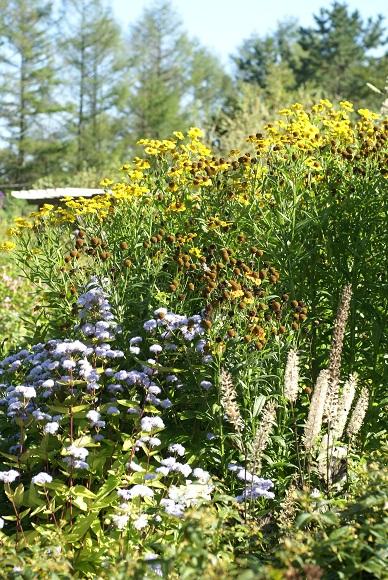 風のガーデン 植栽2