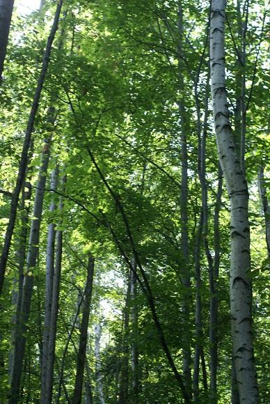 森の時計への道
