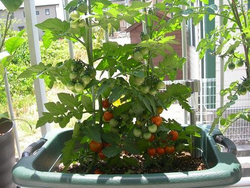 tomato-orange.jpg
