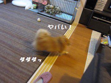 12110602.jpg