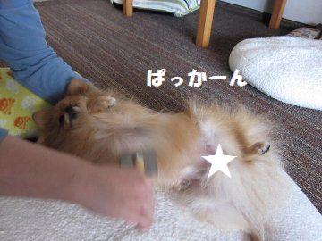 IMG_7555_20121030002608.jpg