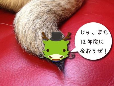 20121230pug01.jpg