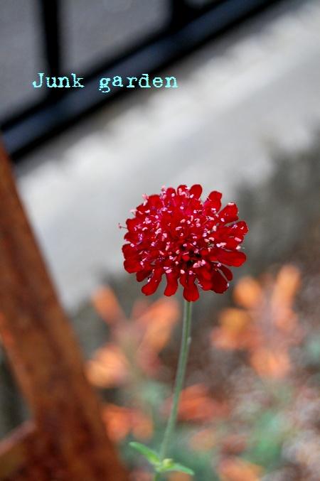 Junk garden2